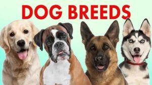 top 10 most popular dog breeds in US 2020