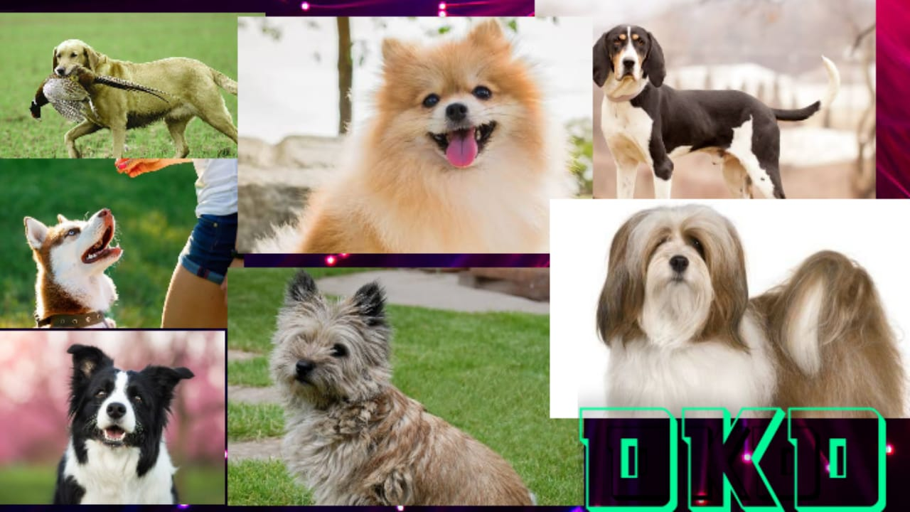 Types of Dog Breeds - list of Dog Breed - Dogkiduniya